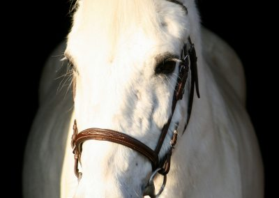 witte iwan