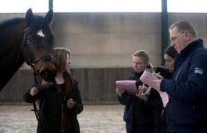 Horse Dating @ Manege Buitenhorst